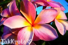 Гавайский цветок, отдушка Франция