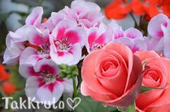 Герань и роза, отдушка Франция