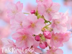 Миндаль и цветы вишни, отдушка Россия