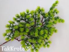 Сосна зелёная